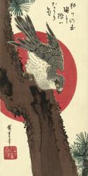 Hawk on Pine by Utagawa Hiroshige Japanese Woodblock