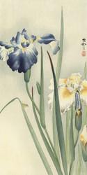 Irissen by Ohara Koson Japanese Woodblock