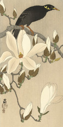 Myna on Magnolia Branch by Ohara Koson Japanese Woodblock