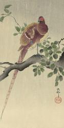 Pheasant by Ohara Koson Japanese Woodblock