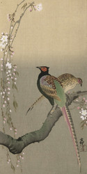 Pheasants and Cherry Blossom II by Ohara Koson  Japanese Woodblock
