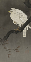 Snowy Eagle on A Tree Branch by Ohara Koson and Matsuki Heikichi Japanese Woodblock