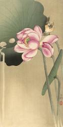 Songbird and Lotus by Ohara Koson 1900 1936 Japanese Woodblock