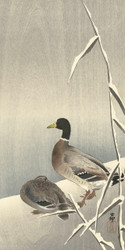 Two Ducks on Snowy Reeds by Ohara Koson and Matsuki Heikichi 1900 1930 Japanese Woodblock