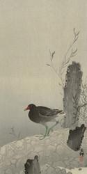 Waterhen by Ohara Koson Japanese Woodblock