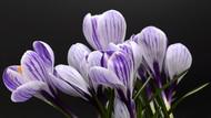 Floral Print MPA010541
