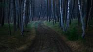 Landscape Print MPA010956