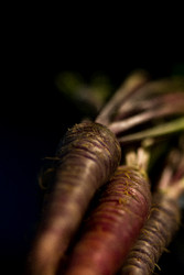 Carrots by Andrew Wilson Food and Beverage Print