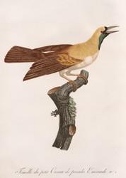 Femelle De Petit Oiseau De Paradis Emeraude by Jacques Barraband
