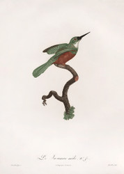 Le Jacamar Male by Jacques Barraband