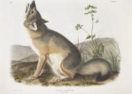 Vulpes Velox Swift Fox By John Audubon