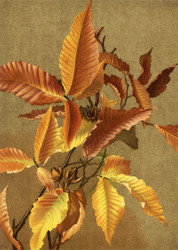 Autumn Leaves No 3 Beech  By Ellen T Fisher Floral Print