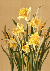 Daffodils by Ellen T Fisher Floral Print