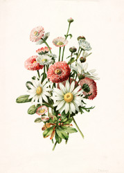 Daisies by Alois Lunzer Floral Print