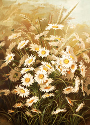Daisies by Ellen T Fisher Floral Print