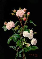 Roses by George Cochran Lambdin Floral Print