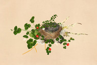 Bird S Nest With Vines By L Prang Co Floral Print