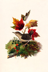 Bird With Autumn Leaves By L Prang Co Floral Print