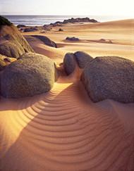Tarkine Sand by Peter Dombrovskis