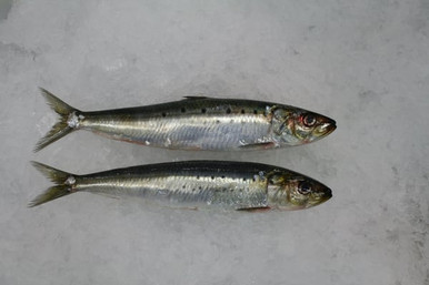 Anchovies are sold in 1lb bags.