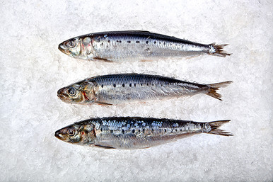 Sardines are sold by the lb.