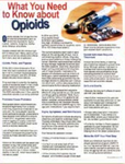 E155 What You Need to Know About Opioids