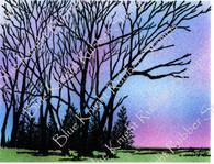 Seasonal Woodland