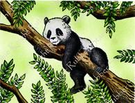 Loveable Panda