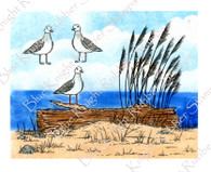 Seagulls and Driftwood