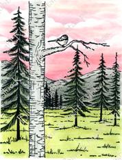 Chickadee in the Woods