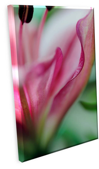 Abstract Floral Gallery Wrapped Canvas 24 x 30 OD