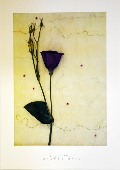 """Lizzieanthus  by Joanna Kidney  18""""W X 26""""H OD  Published  by McGaw Group L.L.C."""