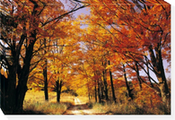 """Fall Trees and Lane #1  JOHN BARTOSIK  26 x 38"""" Overall dimensions  Canvas"""