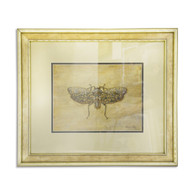 Moth - Framed Artwork