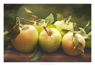 Jill's Green Apples II