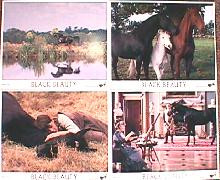 BLACK BEAUTY original issue 8x10 lobby card set