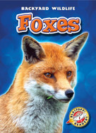 Foxes - 9781600144417 by Emily Green, 9781600144417