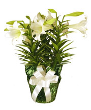 3 Stem Easter Lily