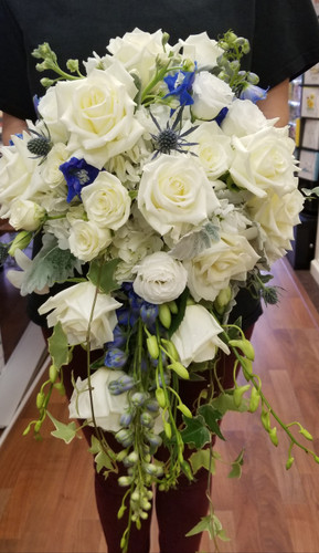 Bridal bqt in lush white and blue mix with roses, stock, orchids, thistle, delphinine, dusty miller and ivy