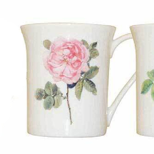Queens Royal Parsons Roses Rosa Alba Mug by Churchill - gift boxed