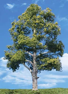 "TR3536 N, HO, O Woodland Scenics Waters Edge Trees 5""-6"" (2)"