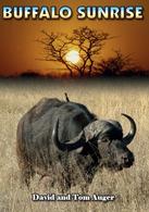 buffalo sunrise hunting dvd africa zimbabwe omay tuskless elephant