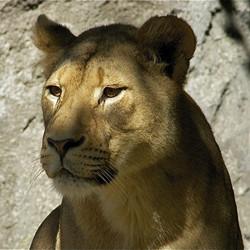 Corporate Lion Membership
