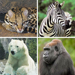 Zoo Gift Card