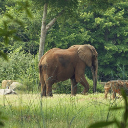 VIP Public Program - Meet and Feed the Elephants (March 21, 2020)
