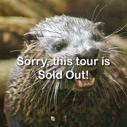 VIP Public Program - Meet and Feed the Otters (March 14, 2020)