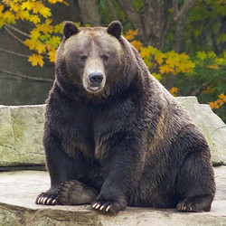 Private Tour - VIP Tour With A Grizzly Bear (2020)