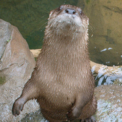 Private Tour - Meet and Feed the Otters (2020)