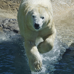 Private Tour - Close Up With Seals and Polar Bears (2020)