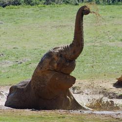 Corporate Membership: Elephant